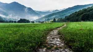 A photo shows a path. This demonstrates concepts discussed in depression counseling in Virginia with Monday Courage.