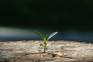 A small leaf grows from a crack in the pavement. This represents concepts discussed in counseling for life transitions in Lynchburg, VA with Monday Courage.